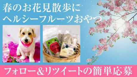 フォロー&リツイート!ワンちゃんウキウキ 春のお花見散歩♪ヘルシーフルーツおやつ当たる!